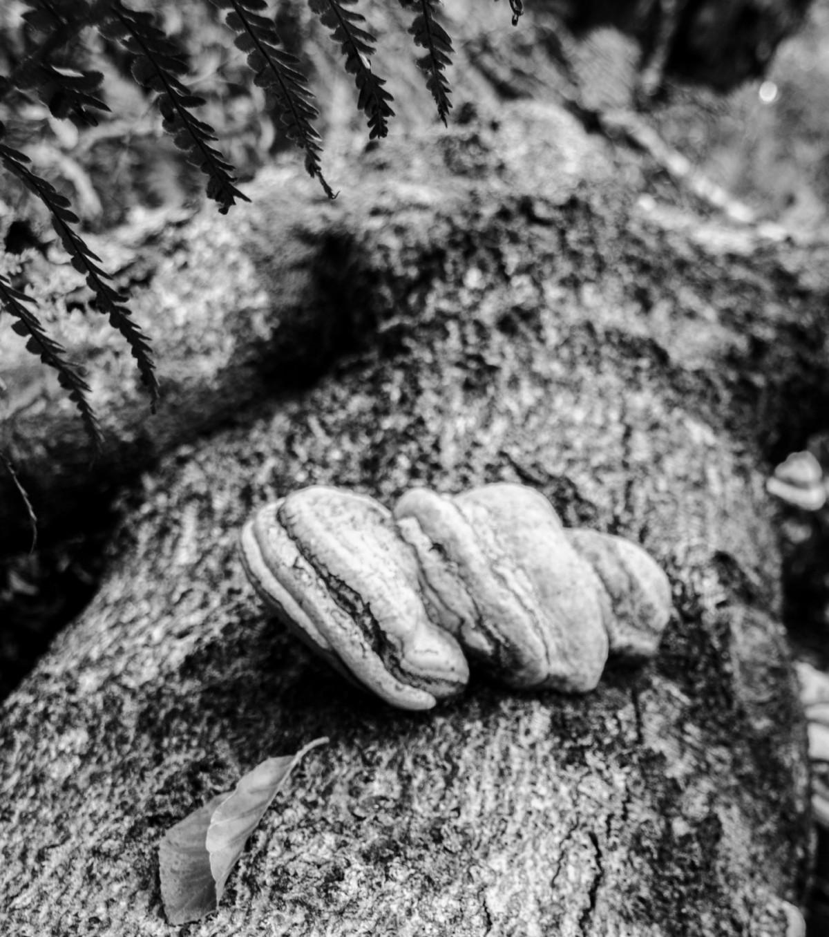 Polymore Mushrooms