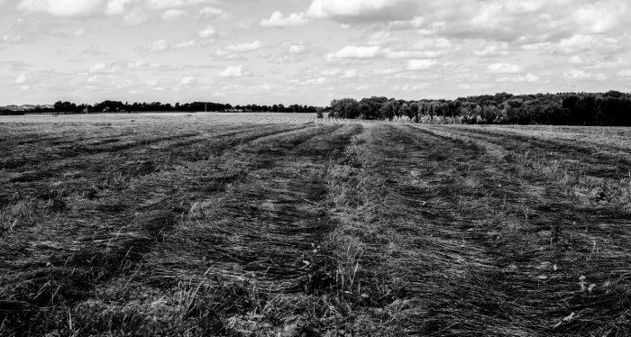 Flax drying